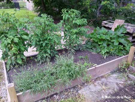 veggi-garden-001